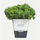 Season Cookshop - Self Watering Herb Keeper