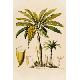 Cuemars - A3 Banana Tree Print - A3