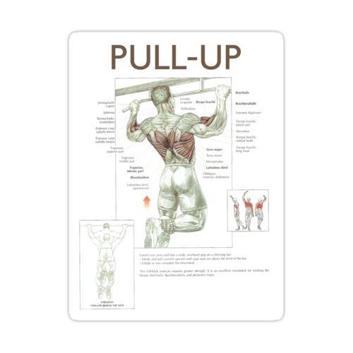 Pull-Up - Übungsdiagramm Sticker