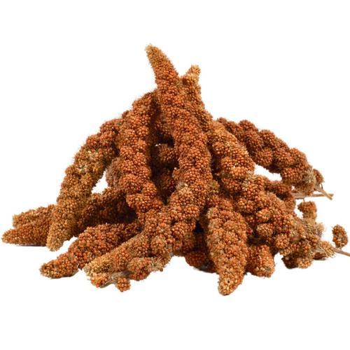 15 kg ® Kolbenhirse rot - Lyra Pet