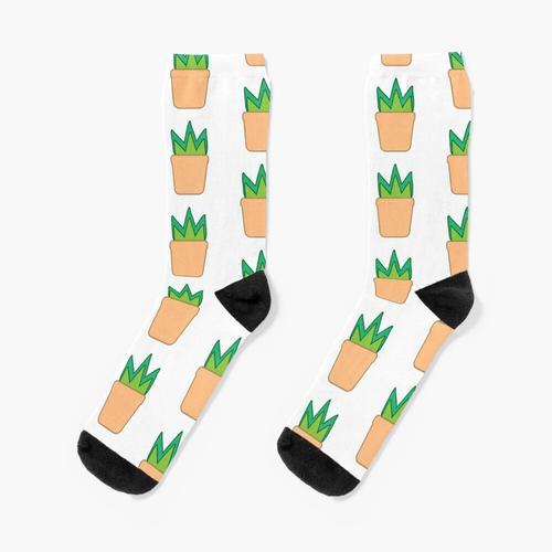 Topfpflanze Socken