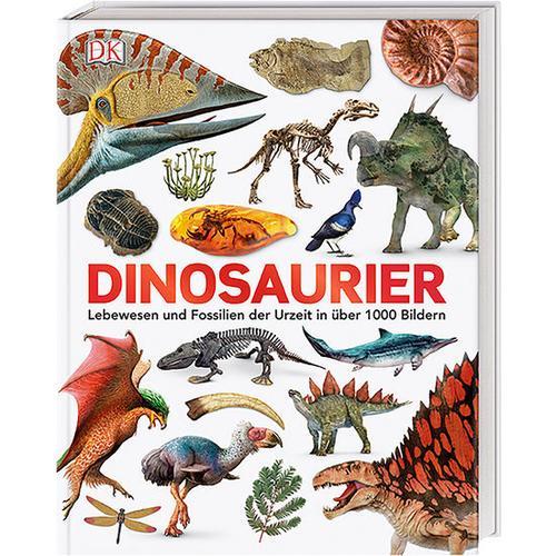Dinosaurier – Lebewesen und Fossilien der Urzeit, bunt