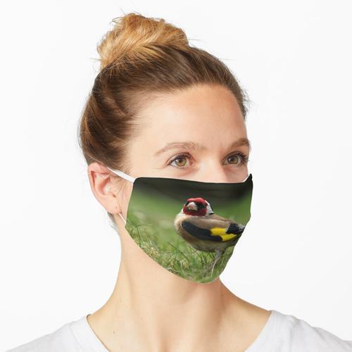 Stieglitz Maske