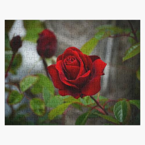 Kleiner Prinz Rote Rose Puzzle
