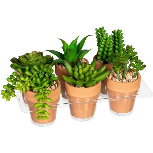 Künstliche Zimmerpflanze »Mini-Sukkulenten« Sukkulente, Creativ green, Höhe 9 cm, im Tontopf, 6er Set