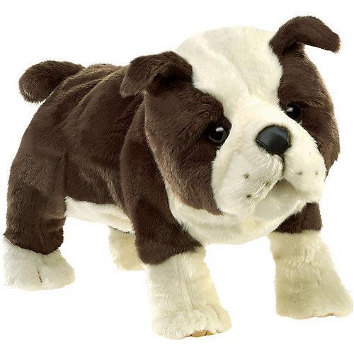 Englische Babybulldogge