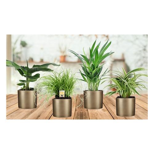 Haustierfreundliche Zimmerpflanzen: 4er-Set