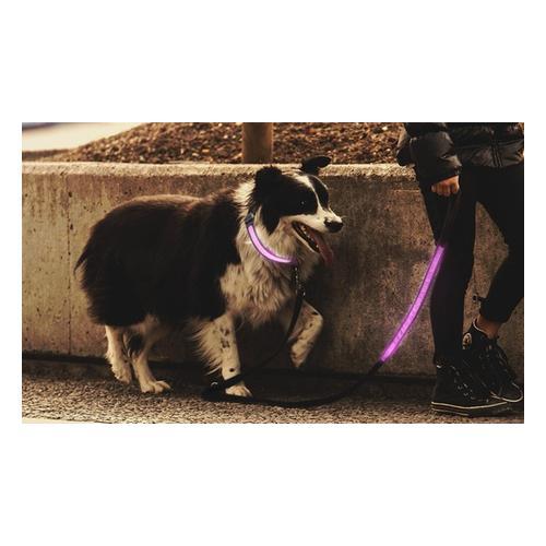 Leuchtendes Hundehalsband: Hundehalsband/ 1x Blau/ M
