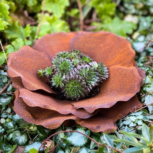 Blume Blütenzauber, Edelrost