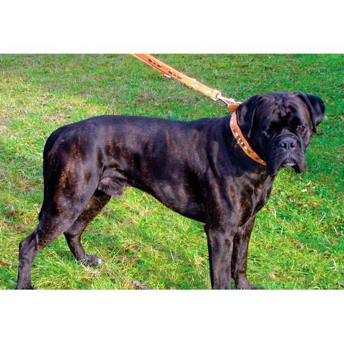 HEIM Hunde-Halsband Buffalo, Echtleder orange Hundehalsbänder Hund Tierbedarf