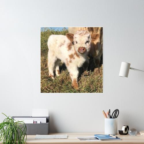 Baby flauschige Kuh Poster
