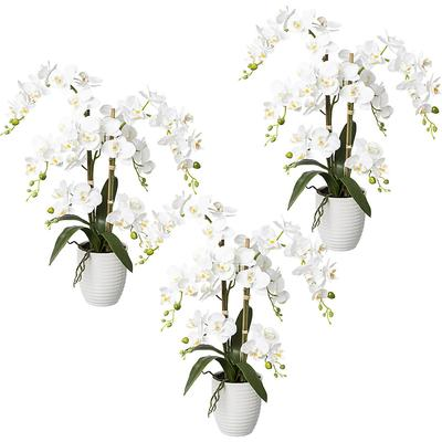 Phalaenopsis, real touch hauteur...