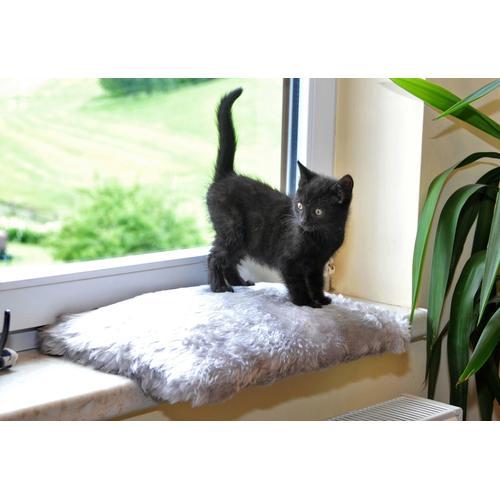 SILVIO design Katzenliege Fensterliege Relax grau Katzenkörbe -kissen Katze Tierbedarf