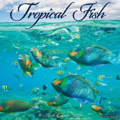 Willow Creek Press Tropical Fish 2022 Wall Calendar