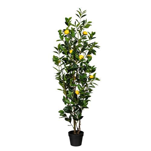 Zitronenbaum Globen Lighting Grün
