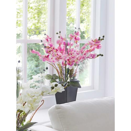 Orchidee im Topf IGEA Rosé