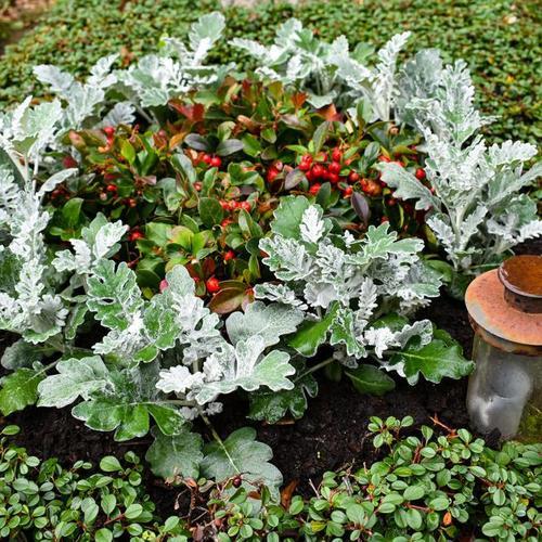 Set Grabbepflanzung Herbstschmuck, Einzel