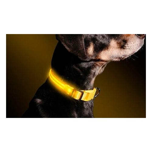LED-Halsband für Hunde: M
