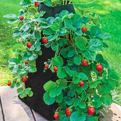 Grow Tub Strawberry Tower