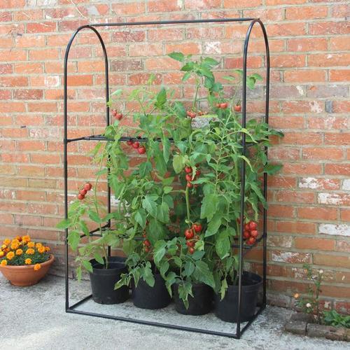 Tomaten-Wachstums-Rahmen